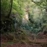 Rumple Quarry in Plymbridge Woods
