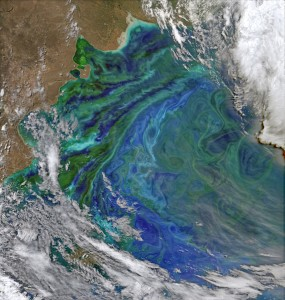 False colour image of phytoplankton blooming off the coast of Patagonia. Acquired 2nd Dec 2014. Image Courtesy of NASA/NASA's Earth Observatory