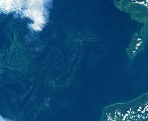 Algal bloom in the Baltic Sea acquired by Sentinel-2A on 7 August 2015. Data courtesy of Copernicus Sentinel data (2015)/ESA.